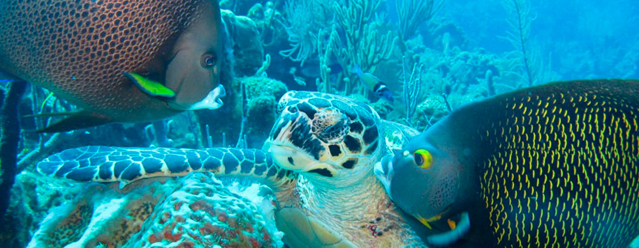 roatan-snorkeling-tour